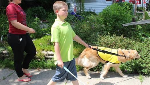 A boy walking with a white cane and Golden Retriever.