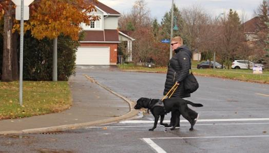 Photo of Ashley and her guide dog Danson walking in a crosswalk on a cloudy day.