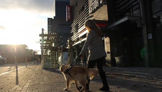 A woman and her guide dog, a golden retriever, walking down a sidewalk into the sunset, away from the camera.