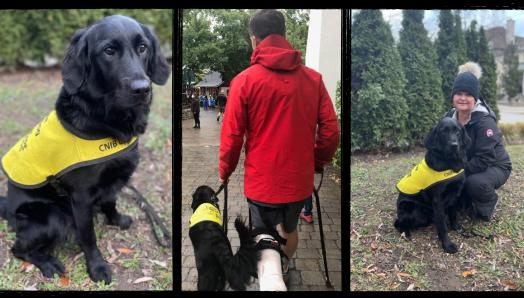 Collage of three photos, from left to right: Hero, a black Labrador-Retriever cross, wearing her Future Guide Dog vest and sitting outdoors on the leaves; Hero sitting next to her puppy raiser, Erin, who is kneeling down next to her; Hero walking with her puppy raiser who is wearing a cast on his foot and using a cane.
